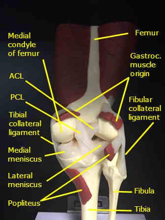 Pain Back Knee Tendinitis Gilbert Chiropractor Gilbert Az